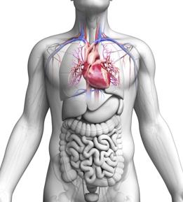 Acid Reflux And Heart Attacks Uc Irvine Health Orange
