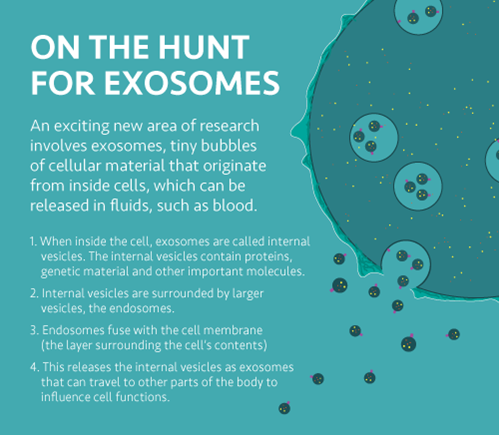 infographic about exosomes