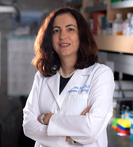 Dr. Daniela Bota, who leads the UCI Center for Clinical Research, in her lab